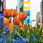 מדריך-טיולים-בניו-יורק.jpg