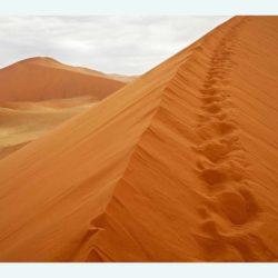 אז יקום דבר  – נצא אל 'המדבר
