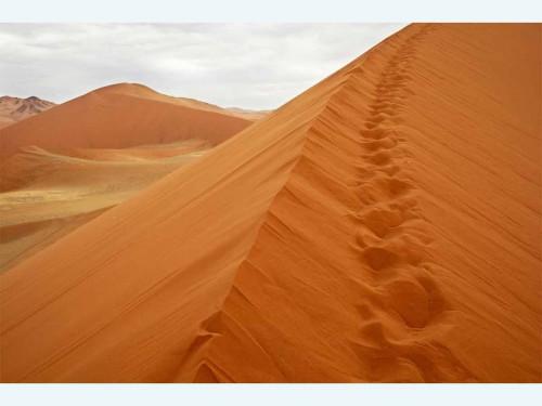 המדבר