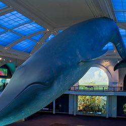 מוזיאון טבע , היסטוריה והמדע בניו יורק