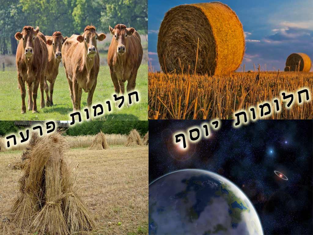 בין חלומותיו של יוסף לחלומותיו של פרעה