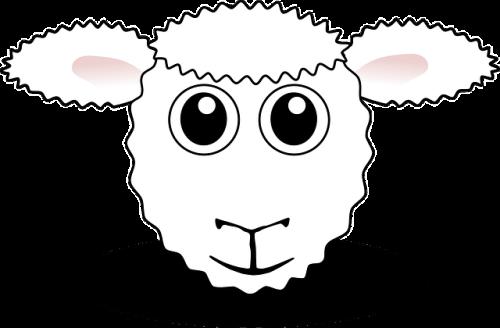 כבש שה