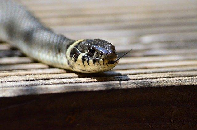 נזקי הנחש והעקרב בעבודת ה'