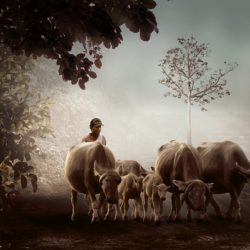 וישלח למען הצאן והבקר