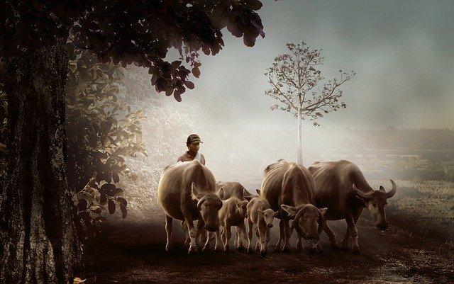גימל תמוז הרועה הנאמן
