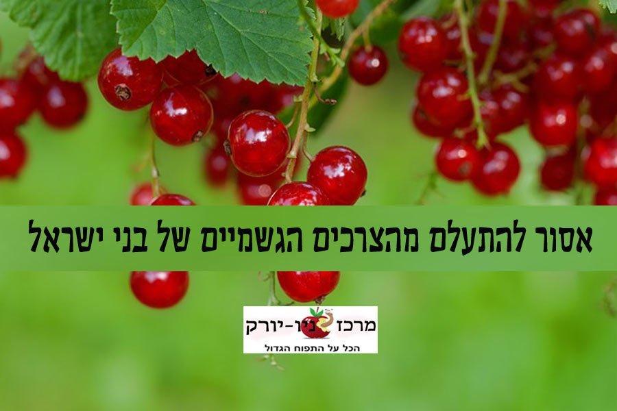 אסור להתעלם מהצרכים הגשמיים של בני ישראל