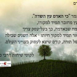 כי האדם עץ השדה – בעבודה