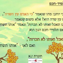 כי האדם עץ השדה – תלמיד חכם
