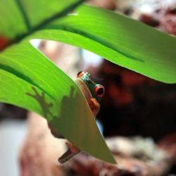 מכת צפרדעים ברוחני