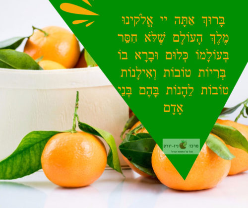"ברכת האילנות בקווינס ניו יורק – Blessing on Budding Fruit Trees (""Birkat Ha'Ilanot"") Queens NY"