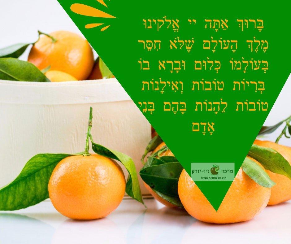 """ברכת האילנות בקווינס ניו יורק – Blessing on Budding Fruit Trees (""""Birkat Ha'Ilanot"""") Queens NY"""