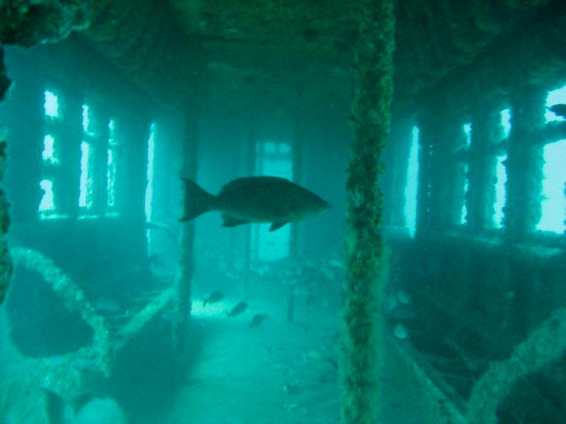 דג שוחה בקרון הרכבת התחתית