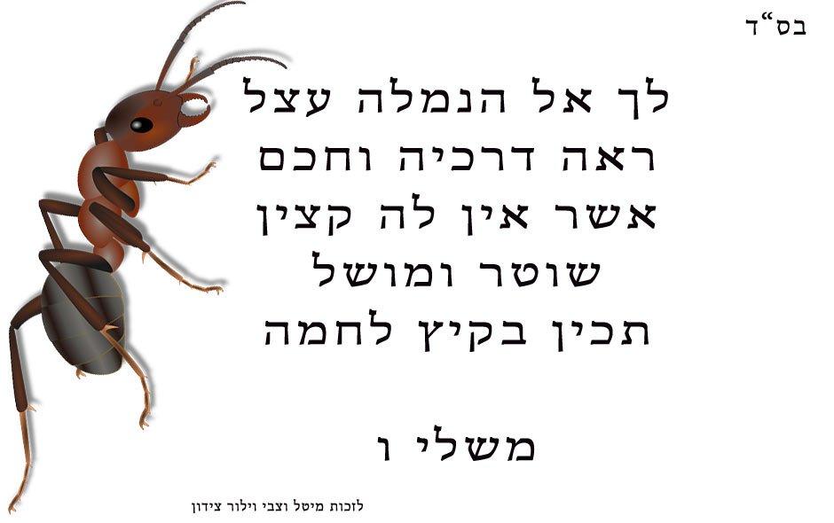 לך-אל-הנמלה-עצל