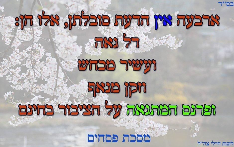 ציטוט-על-גאווה-ומי-שמתגאה