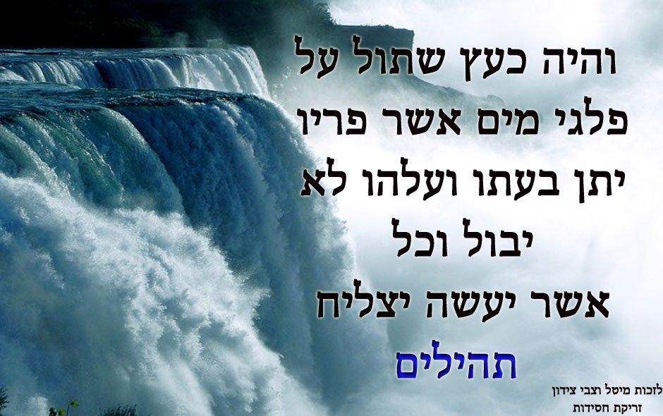 ציטוטים ופסוקים מחזקים מתהילים